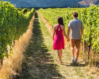 Couple holding hands in vineyard of red wine grapes in the Napa Valley Wine Country