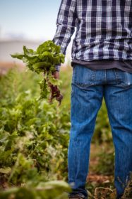 A farmer stands facing the horizon, holding leafy green vegetables in his hand.